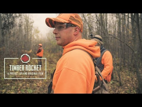Timber Rocket - A Woodcock And Grouse Hunting Story - A Project Upland Original Film