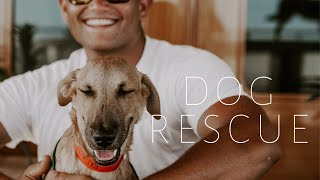 M/Y LAUREL - Rescuing 50 Dogs and Delivering 30 Tons of Aid to Bahamas