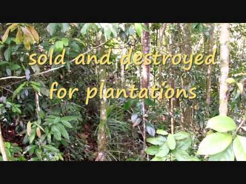 Rainforest Protectors Trust