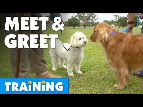 Teach Your Dog To Meet and Greet | Bondi Vet