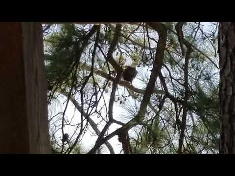 Bald Eagle Sighting On Lake Houston