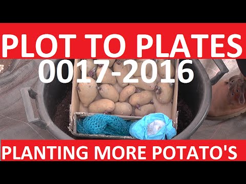 Plot to Plates - Allotment Gardening - 0017-2016 | Planting More Potato's