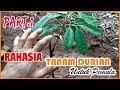 - #PART.1 RAHASIA Cara Menanam Pohon Durian bagi Pemula versi IRP