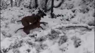 De brune jentene koser seg i snøen