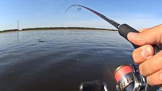 Как ловят с берега ЧЕХОНЬ на Волге местные рыбаки. Подробно разъясняю