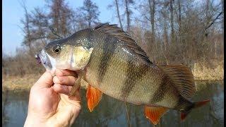 Рыбалка на Спиннинг с Берега. Окунь, Щука Осенью на Джиг.