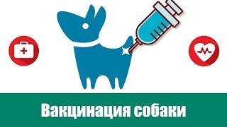 Правильная вакцинация собаки