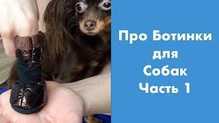 Про Ботинки для Собак (часть 1)