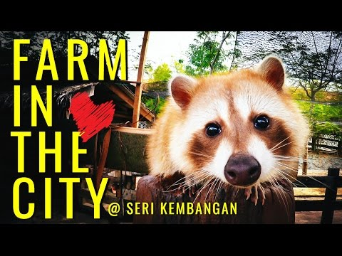 Farm In The City 城の农场 | Seri Kembangan
