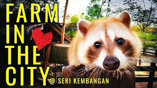 Farm In The City 城の农场 | Seri Kembangan