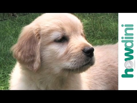 How to potty train a puppy - Housebreaking your dog
