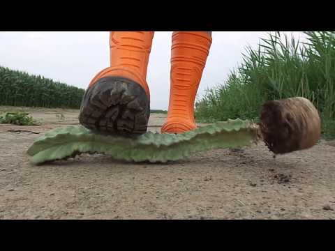 Cofra Thermo Boots stomp, trample and destroy Cactus / Plant