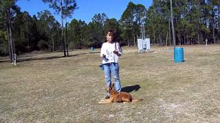 Dog Training Red Heeler Mix Blazer Aggression Issues Dogtra E Collar Pager