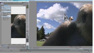 Сони вегас про 12 - сложное выделение объекта в видео ( шерсть)