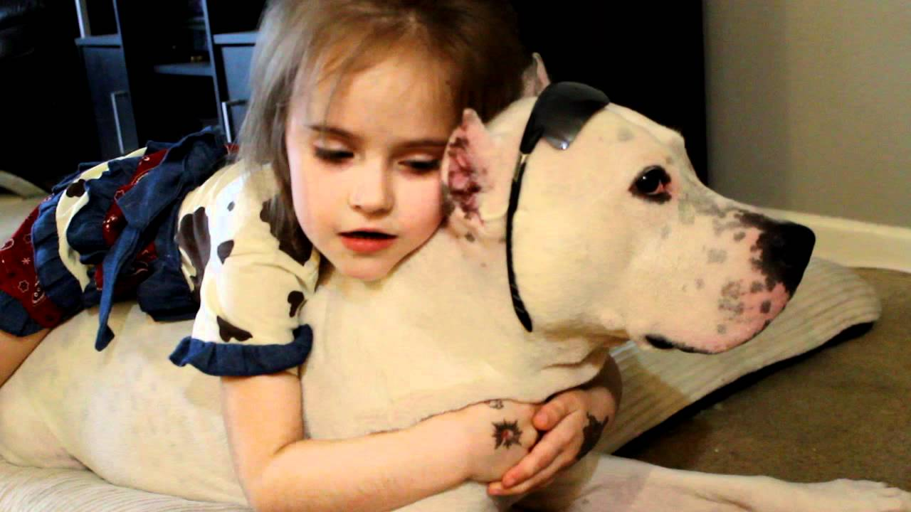 15 Things that you have to endure of your Pitbull for real