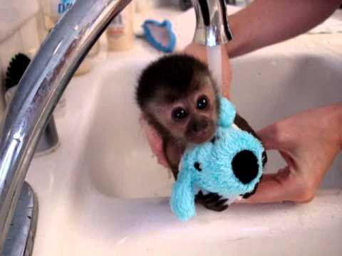baby monkey nala gets a bath - YouTube