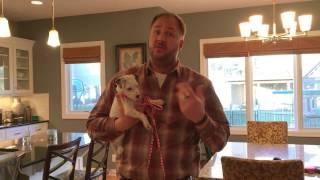 Olive's Puppy Potty Training Tips