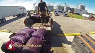 Fruge Farms 60 sec