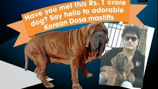 Bengaluru man becomes India's first owner of rare dog breed that costs Rs. 1 crore