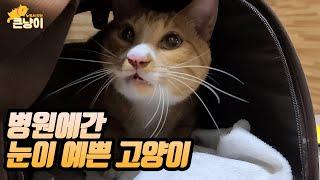 예쁜눈이 아파서 고양이가 병원에 갔습니다.