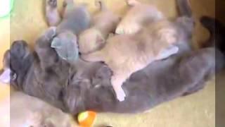Шок!!! Котята едят свою маму