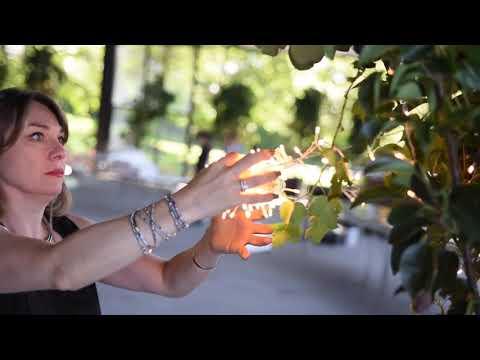 Boda Espectacular en Jardin Cedros