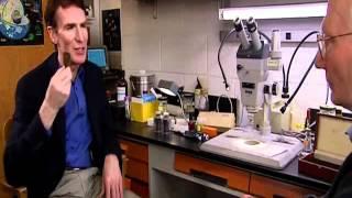 현미경의 발명과 미생물