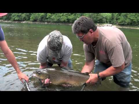 Video Catching big catfish videos
