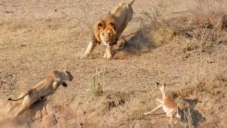 This Is Why The Lionesses Hunt