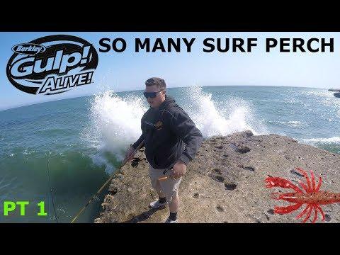 SANTA CRUZ CLIFF FISHING FOR TONS OF BARRED SURF PERCH