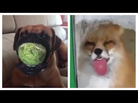 TRY NOT TO LAUGH or SMILE Watching Funny and Cute ANIMALS 😝😎🙊 YLYL ★68