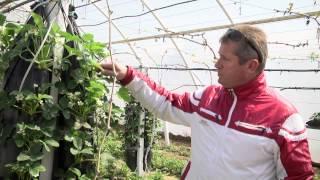 Выращивание клубники(Бизнес-идея по выращиванию клубники. Подробнее http://blogstrazh.ru/vyrashhivanie-klubniki.html., 2015-01-24T18:13:49.000Z)