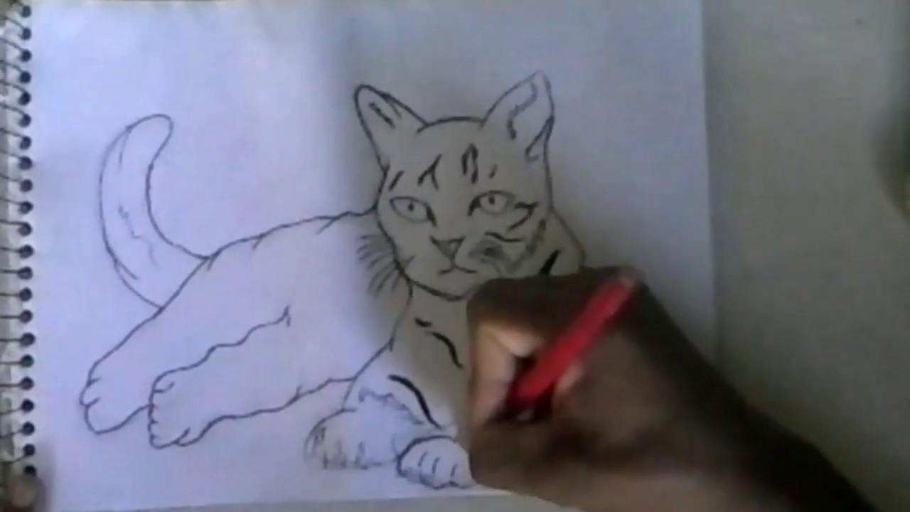 Como Desenhar Um Gato Passo A Passo