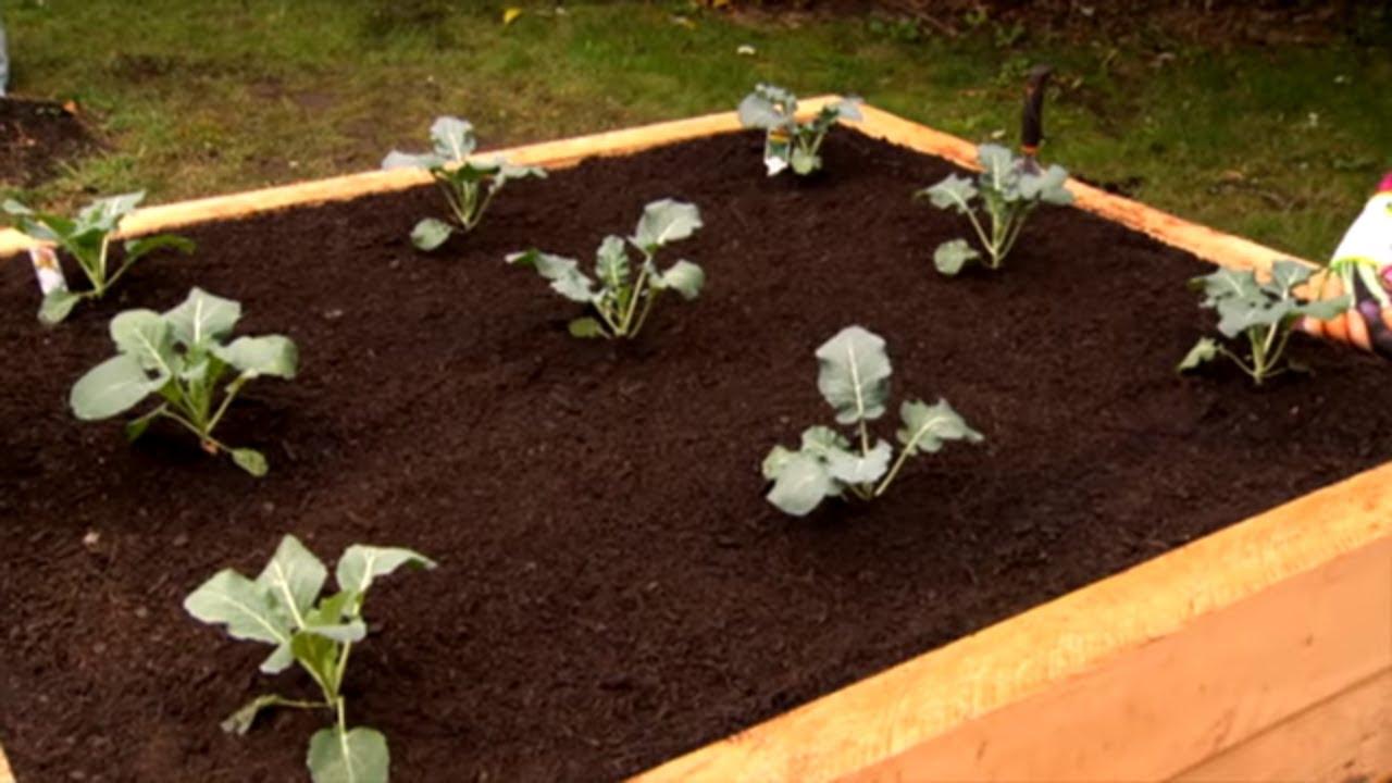 Mitre 10 Building Raised Vege Garden