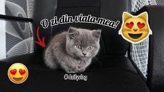O zi din viata mea de pisica !!! ( Pablo face Daily Vlog )