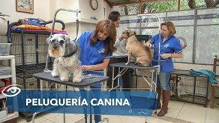 Peluquería canina  Día a Día  Teleamazonas