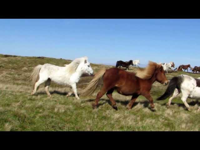 RAJ NA ZEMLJI: Ostrvo prepuno ponija