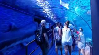 New Shark Aquarium at Dubai Mall Underwater Zoo 21.07.2016 اكواريوم أسماك القرش الجديد في دبي