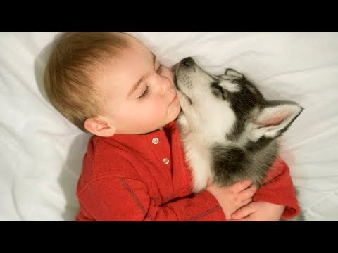 Cute Baby and Dog Sleeping All Days - Dog Loves baby Compilation