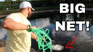 BIG NET catches RAINBOW 🌈 Butterfly Fish !