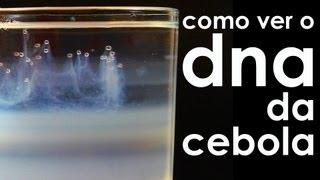 Como ver o DNA da cebola (EXPERIÊNCIA) thumbnail