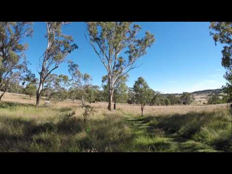 3D shoot at Darling Downs Field Archers