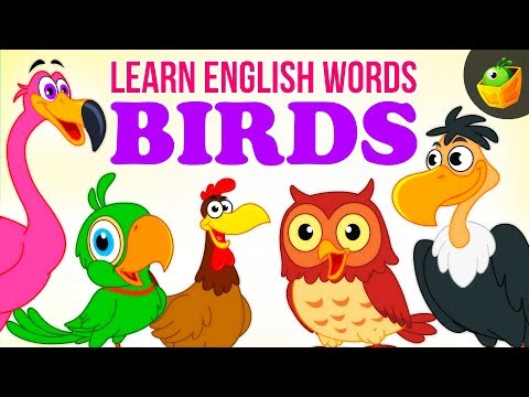 Birds  Pre School  Learn English Words Spelling Video For Kids and Toddlers