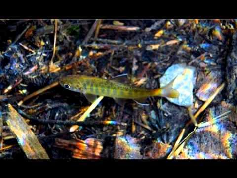The Tomales Bay Watershed: Lagunitas Creek