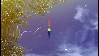 Рыбалка на поплавок караси сазан карп рыбалка зимой