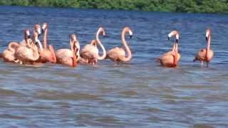 Los flamingos rosados de Ria Celestún Merida Yucatan