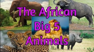 African Safari Wildlife  Big 5 Game Animals Lion Elephant Leopard Rhino Buffalo - School Projects