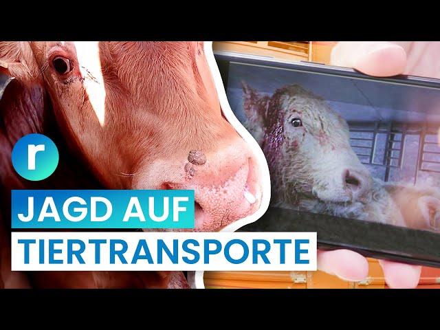 Tiertransporte: Kampf für mehr Tierschutz auf der Autobahn I reporter