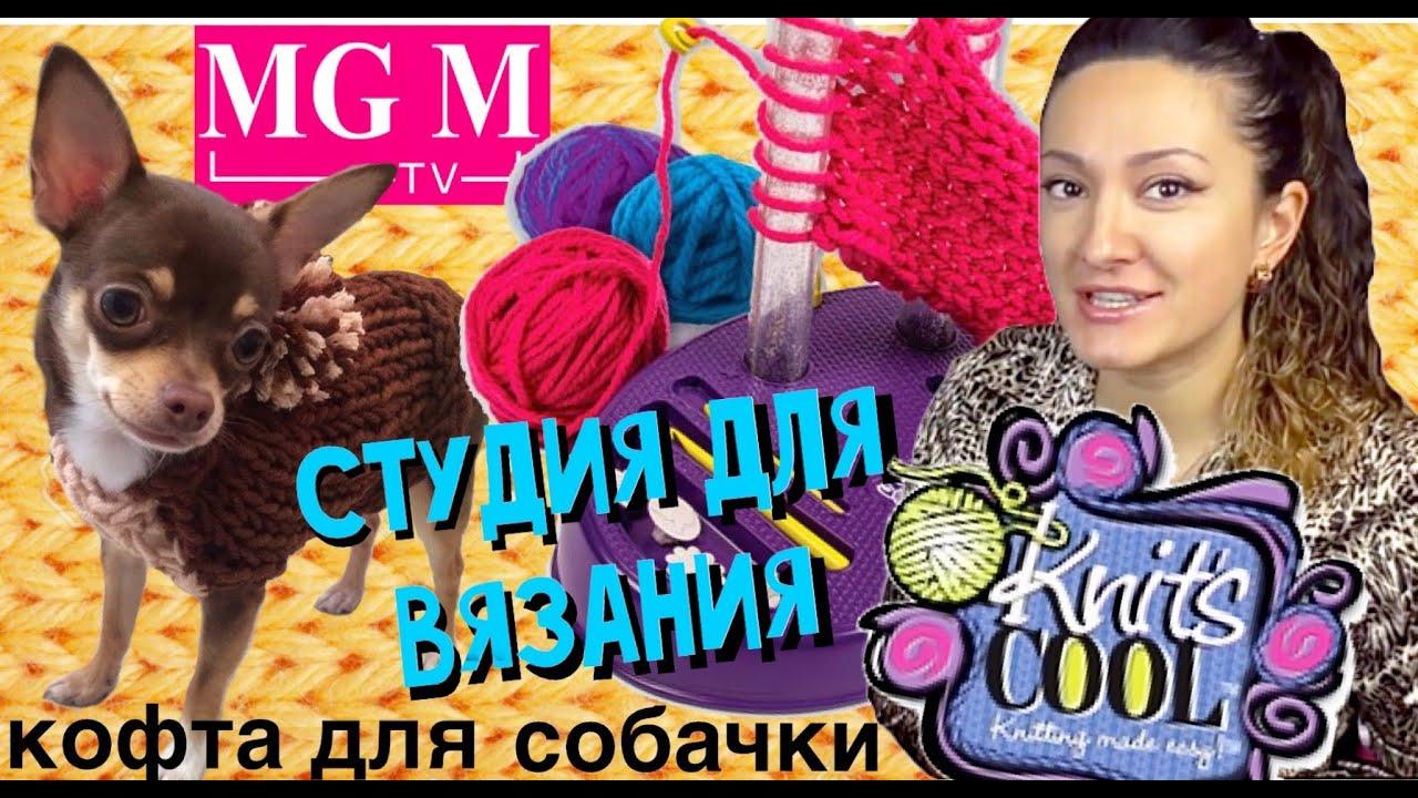 Щенок Русской цветной Болонки и кошка - YouTube