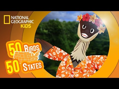 Hawaii - Feat. Rapper MC Nene the Nene | 50 BIRDS, 50 STATES